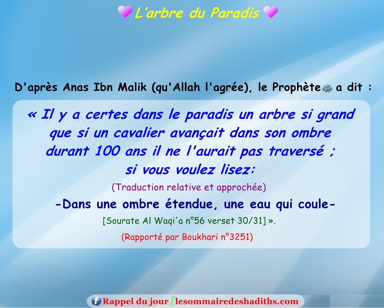 hadith L'arbre du Paradis (Anas Ibn Malik)