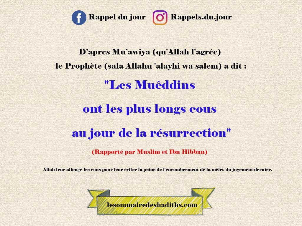 Mu'awiya - Les Muêddins ont les plus longs cous